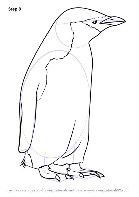 learn   draw  chinstrap penguin antarctic animals
