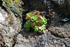 Plante Succulente Espèces Représentatives : la flore et la faune de mad re ~ Nature-et-papiers.com Idées de Décoration