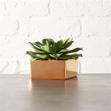 potted succulent with copper pot   Reviews   CB2
