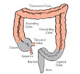 Cure Pelvic Floor Dysfunction by Diagram Of The Colon