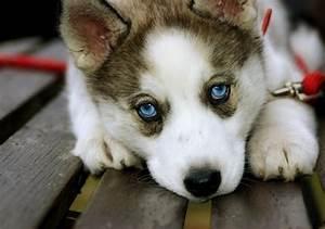 Dogs... - Beautiful Nature Photo (23423434) - Fanpop