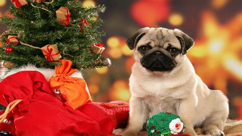 Just tap a confirmation button, and get instant results. puppy christmas wallpaper 2017 - Grasscloth Wallpaper