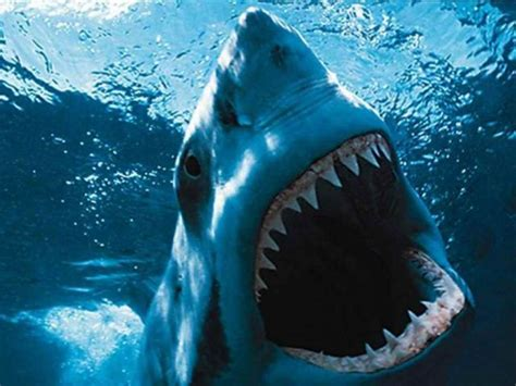 Halloween 6 Producers Cut Uk by Film Jaws Great American Things
