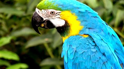 amazon parrot hd wallpapers