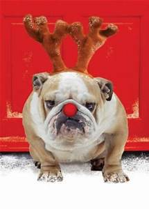 Pet Funny Christmas Quotes QuotesGram