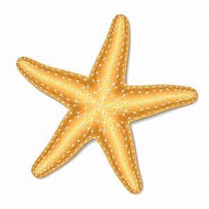 starfishLogo_190 Starfish – Amy's Something Special