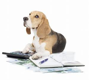 From Dog Lover to Business Owner: How to Succeed in a Dog ...