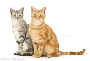 cat sitters cat sitting clipart