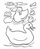 Coloring Ducks Sheets Easter Duck Pages Drawing Colouring Printable Preschool Pond Toddlers Draw Animals Kindergarten Happy Toddler Ducklings Suitable Activity sketch template