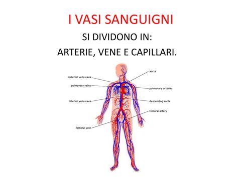 vasi capillari i vasi sanguigni