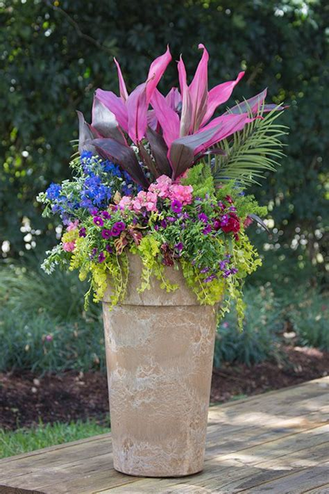 delphinium care in pots best 25 hibiscus tree ideas on hibiscus tree care outdoor pots and planters and