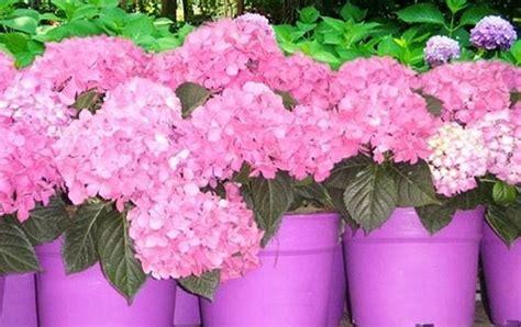 terrazzo in fiore fiori da vaso piante da terrazzo fiori da vaso