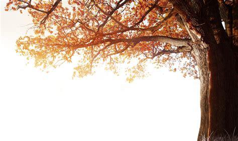 fall sky png free fall sky png transparent images 4754