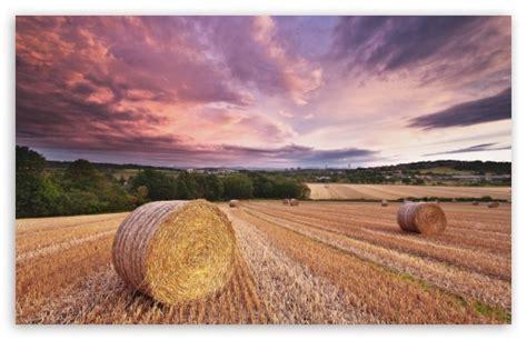 Magical Harvest 4k Hd Desktop Wallpaper For 4k Ultra Hd Tv