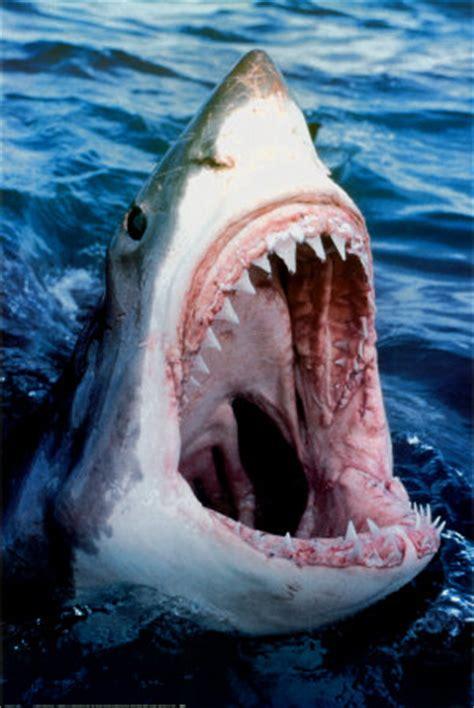 animals world dangerous sharks