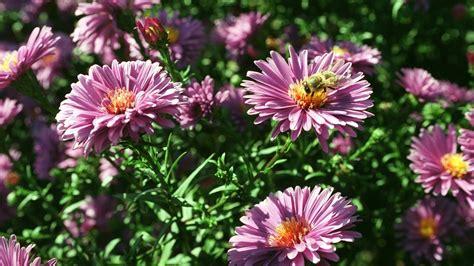 Garten Norden Pflanzen by Garten Einmaleins Stauden Pflanzen Und Pflegen Themen