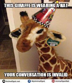 Drunk Giraffe Meme - giraffe meme different types of funny animal memes pinterest