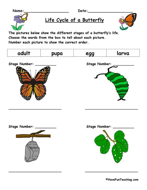 Life Cycle Of A Butterfly Worksheet  Have Fun Teaching