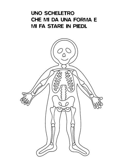 grande disegno corpo umano organi interni gf85 pineglen