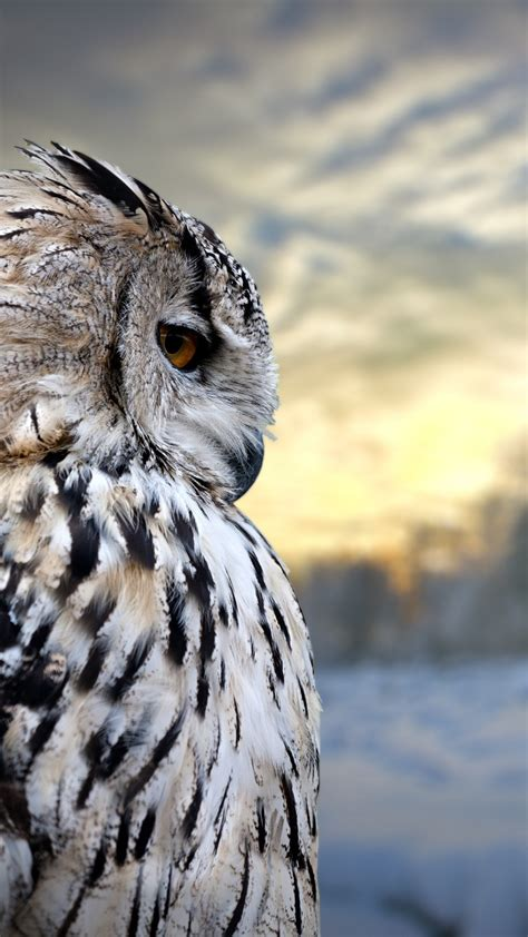 Owl Wallpapers by Owl Iphone Wallpaper 80 Images