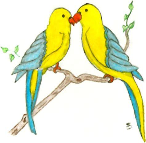 drawn lovebird  bird pencil   color drawn