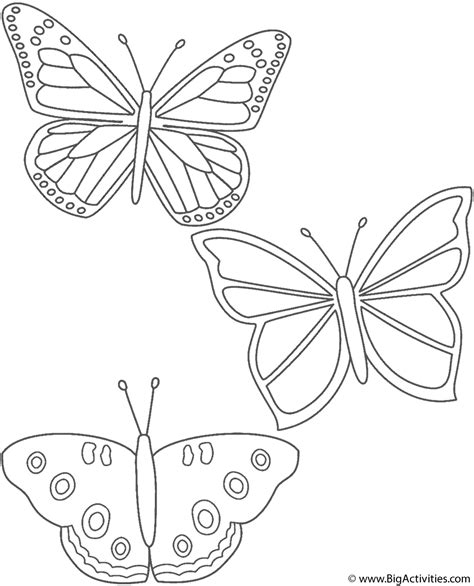 butterflies coloring page insects