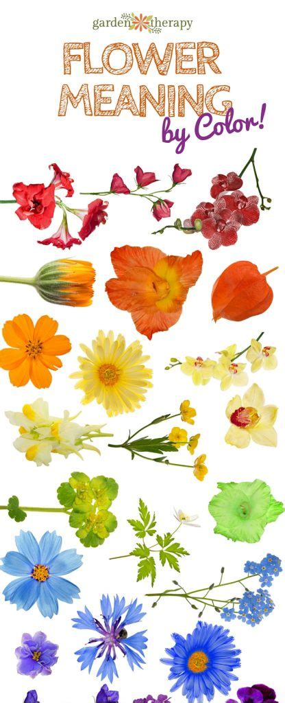 flower color meanings what does your bouquet say flower color meaning and