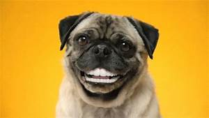 Smile Dog GIFs - Find & Share on GIPHY