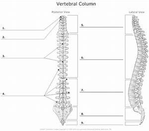 Spine Bones Diagram