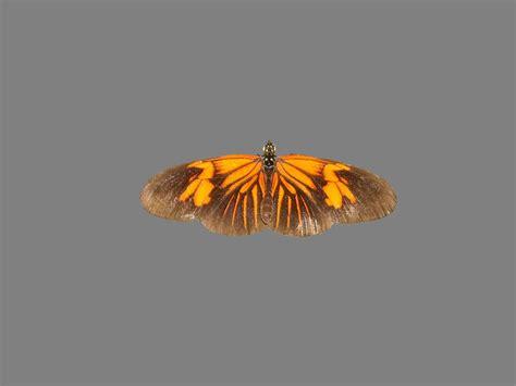 Free photo: Butterfly, Mot, Nice, Night - Free Image on ...