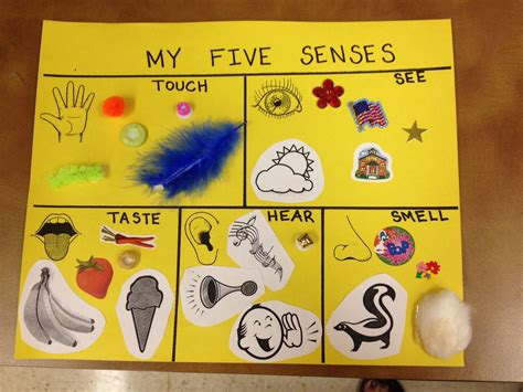 five sense worksheet new 904 five senses preschool 783 | fba15d9e2a798b61f96cb705bab309b4