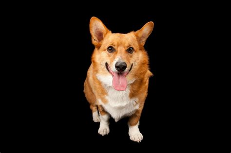learning  dogs recognize emotions