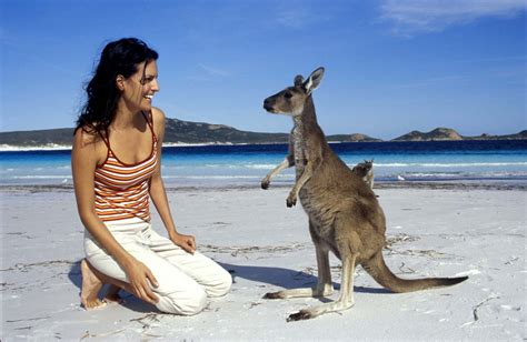 australia tourism bureau more than just a pretty australian animals