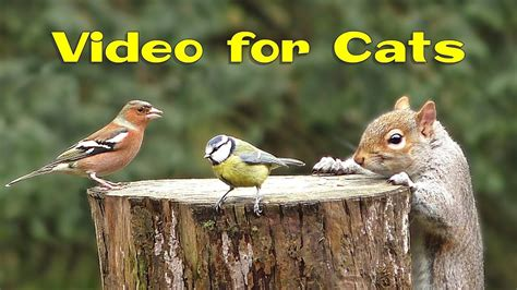 Videos for Cats and Dogs : 8 Hours of Birds and Squirrel ...