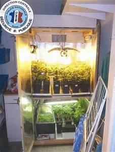 Le Fumeur De Joints Cultivait De L39herbe De Cannabis Pour