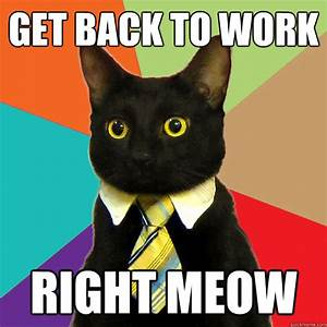 Get back to work Right Meow - Business Cat - quickmeme