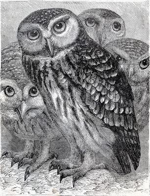 vintage  wonderful owls printable