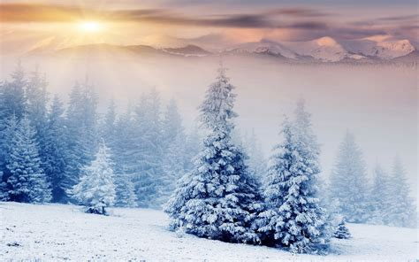 Nature Landscape Winter Snow Mountain Forest
