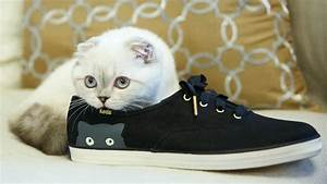 Taylor Swift's cat, Olivia Benson, cuddles up in a Keds ...