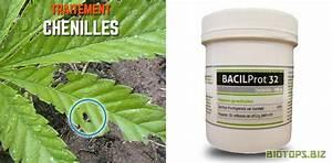 Produit Contre Les Guepes : que faire contre les nuisibles du cannabis biotops biz ~ Dailycaller-alerts.com Idées de Décoration
