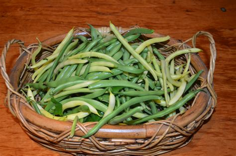 freeze beans freezing beans a series of picture instructions on how to freeze your excess beans 187 my
