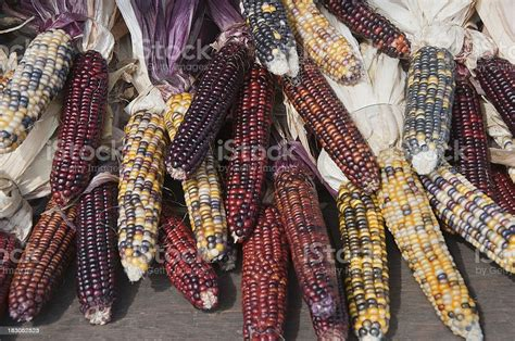 Maize Indian Corn Stock Photo - Download Image Now - iStock
