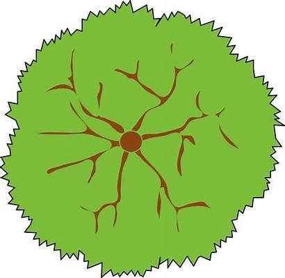 Tree Landscape Clipart Symbol Clip Landscaping Symbols