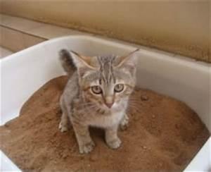 Litiere Chat Sans Odeur : les diff rentes liti res pour chat ~ Melissatoandfro.com Idées de Décoration
