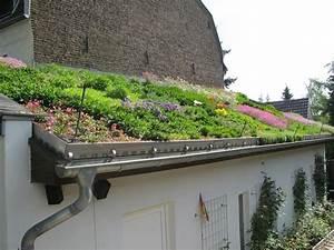 Extensive Dachbegrünung Aufbau : mediterrane dachbegr nung gartenbau und landschaftsbau aus erftstadt wir planen und bauen ~ Whattoseeinmadrid.com Haus und Dekorationen