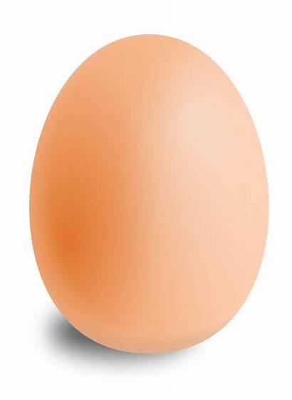 Egg Transparent Background Clipart Eggs Clear Bird