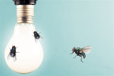 why are bugs attracted to light why are bugs attracted to light science abc