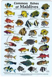 Fishes of the Maldives Identification Chart (water ...