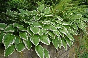 Schattenpflanzen Garten Winterhart : bl hpflanzen gr ser und gr npflanzen als bodendecker schattenpflanzen garten gestaltung und ~ Sanjose-hotels-ca.com Haus und Dekorationen