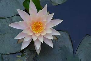 Images Gratuites   Cactus  Fleur  P U00e9tale  Botanique